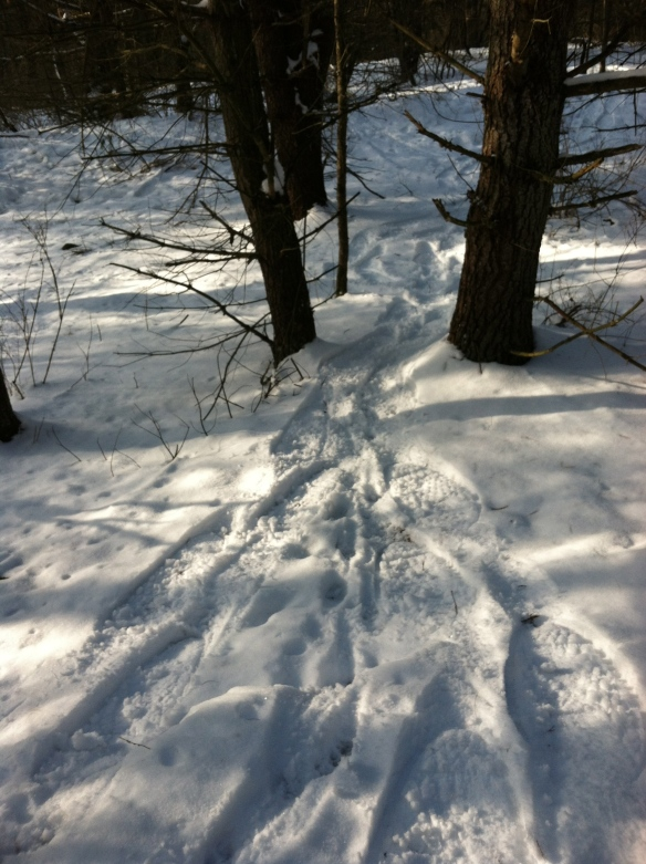 Our path snow shoeing through the woods today.