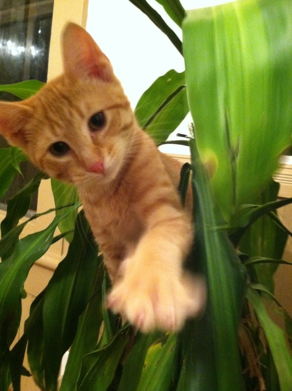 Simba, Jungle Cat