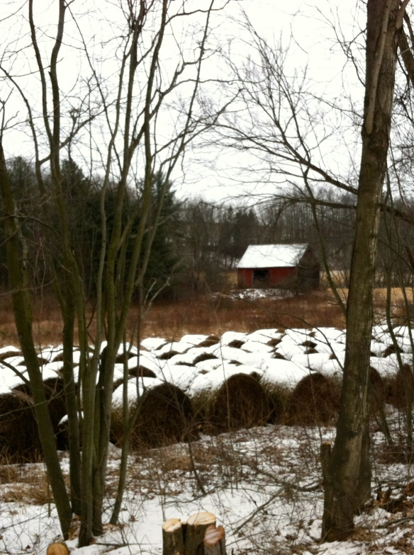 Snowy bales.  Juniper Swamp road.  I love that name, and I love the walk too.