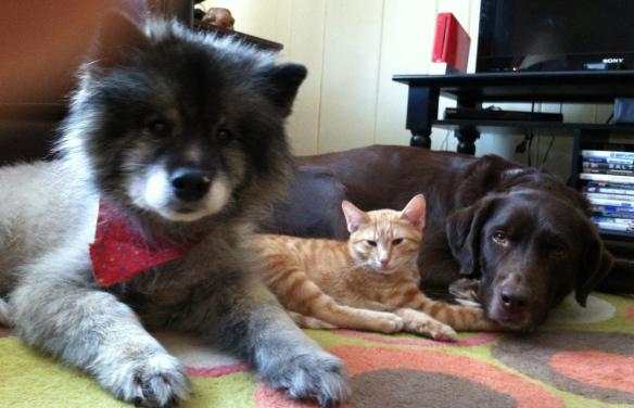 Family of Animals (minus one cat) curled-up together last night.  Kodi, Simba, Weston.