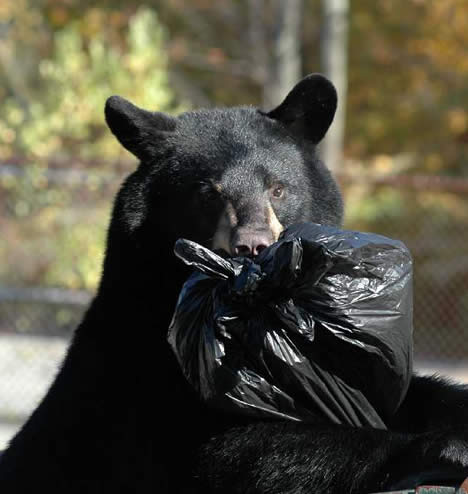 NJDEP Division of Fish & Wildlife - Know the Bear Facts-Black ... www.state.nj.us -